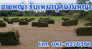 ขายหญ้า รับเหมาปูสนามหญ้าทุกชนิด