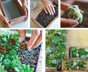 กรอบรูป ธรรมชาติ (wall plants) by ladda