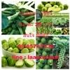 เมล็ดพันธุ์พืชไร่