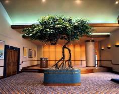 ต้นไทรdesign