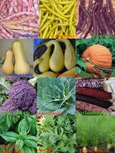 เมล็ดผัก-สมุนไพร จากต่างประเทศ