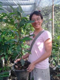 มณฑาสวรรค์สีชมพู ต้นใหญ่พิเศษ ต้นนี้เลยค่ะ