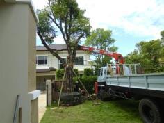 บริการปลูกต้นไม้ใหญ่