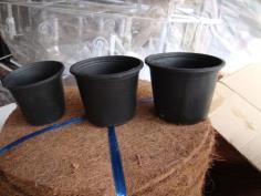 กระถางพลาสติกดำ (black plastic pot)