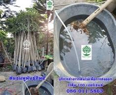 บริการรับล้างรากต้นไม้เพื่อการส่งออก