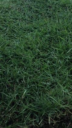 หญ้านานาชนิดราคารวมปลูก