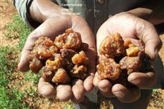 มดยอบ เม็ดมดยอบ แท้ 100% จากประเทศโซมาเลีย