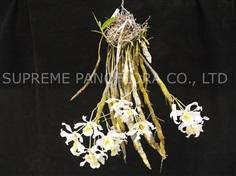 เอื้องคำกิ่ว (Dendrobium signatum)