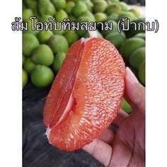 ผลส้มโอทับทิมสยาม