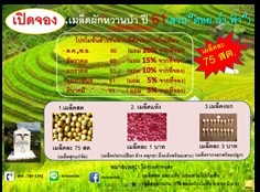 ขายเมล็ดผักหวานป่าลำพูน  สวน ดอยน้ำฟ้า  ปี61