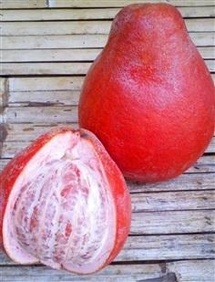 ส้มโอแดงเวียดนาม