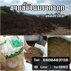 ขายขี้วัวนมราคาถูกจัดส่งทั่วไทย