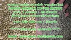 ขายส่งกาแฟดิบ อาราบิก้า จากเชียงใหม่ (GREEN ARABICA COFFEE B
