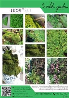 มอสเทียม (Artificial Moss Panel)