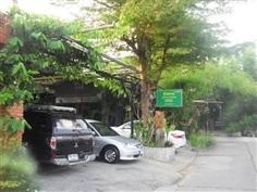 ต้องการขาย ต้นไม้ใหญ่ในบ้าน หมู่บ้านเมืองทอง 5ติดกับ มสธ