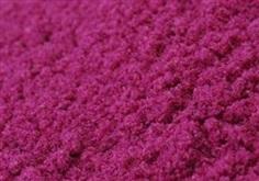 ผงแก้วมังกรแดง Red Dragon Fruit Powder