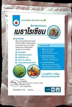 เมธาไรเซียม ป้องกันกำจัดแมลงศัตรูพืช