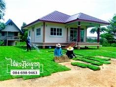 ขายหญ้า จำหน่ายหญ้า หญ้านวลน้อย ราคาถูกจากไร่หญ้าครุซา