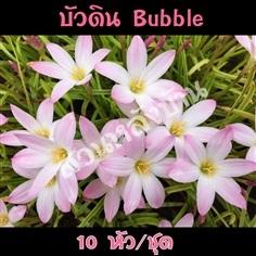 บัวดิน บับเบิ้ล (Bubbles)
