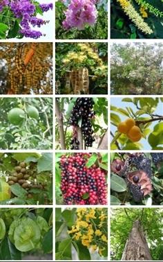 เมล็ดพันธุ์ไม้ป่าเศรษฐกิจ