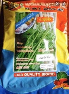 จำหน่ายเมล็ดพันธุ์ผักบุ้งจีน