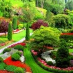 เมล็ดพันธุ์ชุดรวมไม้ดอกสวนญี่ปุ่น