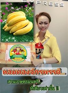 หน่อกล้วยหอมทองจักรพรรดิ  หอมทองแท้ ที่เดียวเท่านั้น
