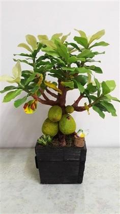 ต้นขนุนจากดินไทย