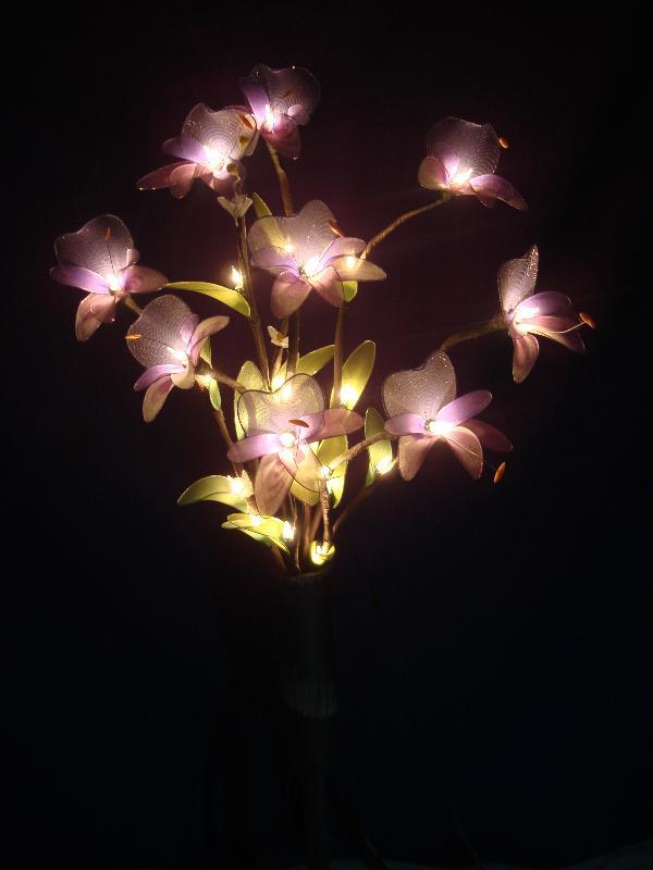 โคมไฟมหาหงส์สีม่วง