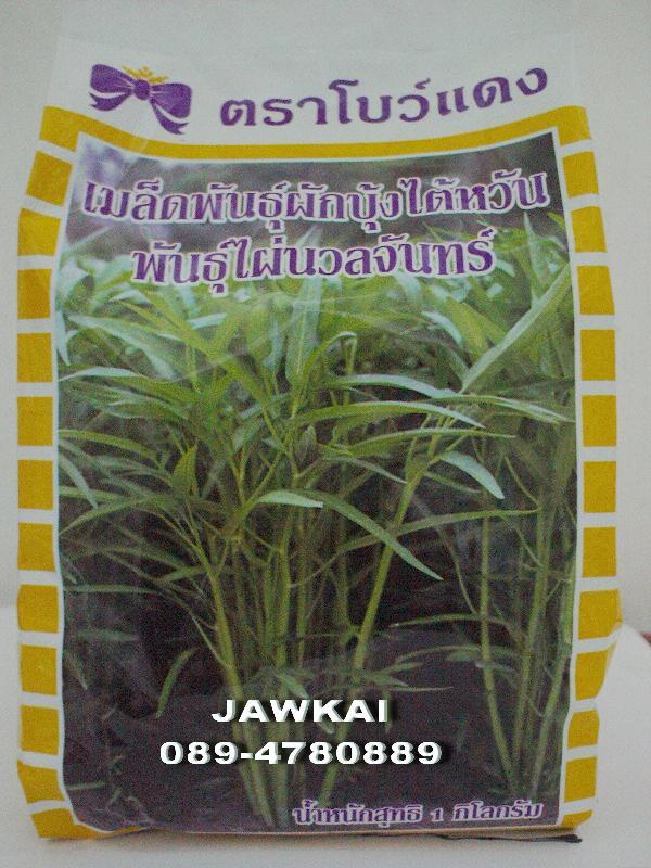 เมล็ดผักบุ้งจีนใบไผ่ ไผ่นวลจันทร์,ขายเมล็ดพันธุ์ผักบุ้งจีนใบไผ่,Swamp Morning Glory seed,Water Morning Glory seed,ผักบุ้ง