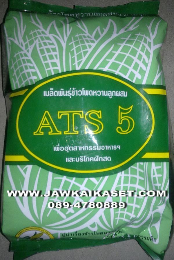 เมล็ดพันธุ์ข้าวโพดหวาน ATS5