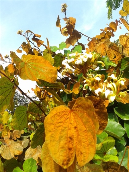 ใบไม้สีทอง