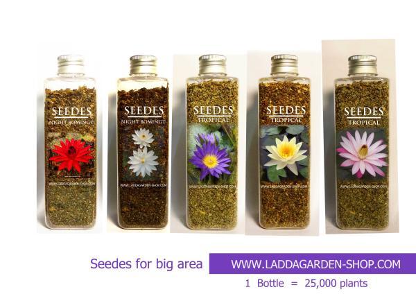 seed  tropical water lilies in siam,seed tropical,เมล็ดพันธุ์ไม้ดอก-ไม้ประดับ