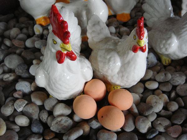 ไก่แจ้กับไข่ (22)
