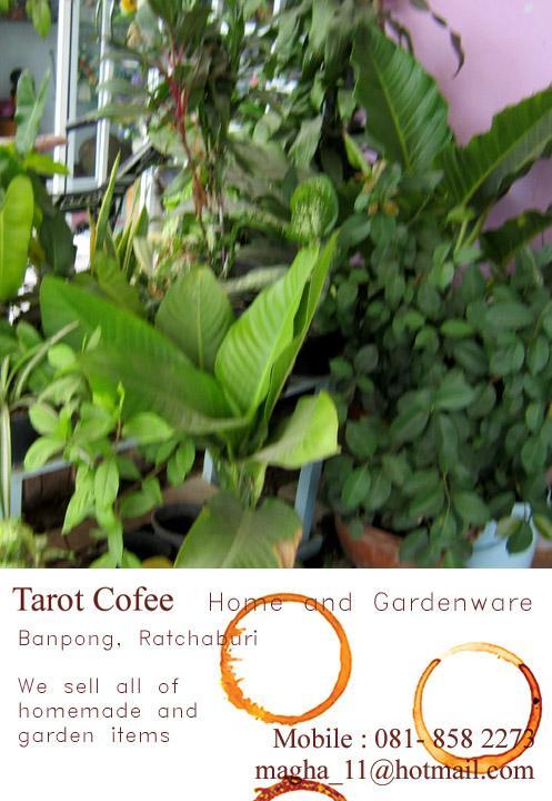 กระถางต้นไม้ ของแต่งสวน ของแต่งบ้าน,บ้านโป่ง ของแต่งบ้าน แต่งสวน บ้านนก ของทำมือ กาแฟสด ชา ร้านกาแฟ  plants DIY products decor ,กระถาง