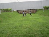 งานปูหญ้าสนาม