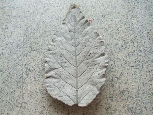 ใบไม้ ซีเมนต์ ธรรมชาติ