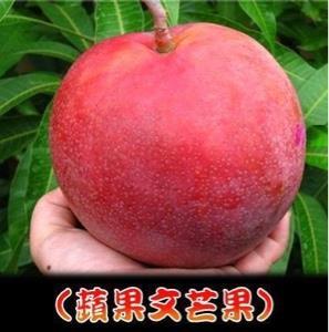 มะม่วงผิงกั่วเหวิน (แอปเปิ้ลแดง)
