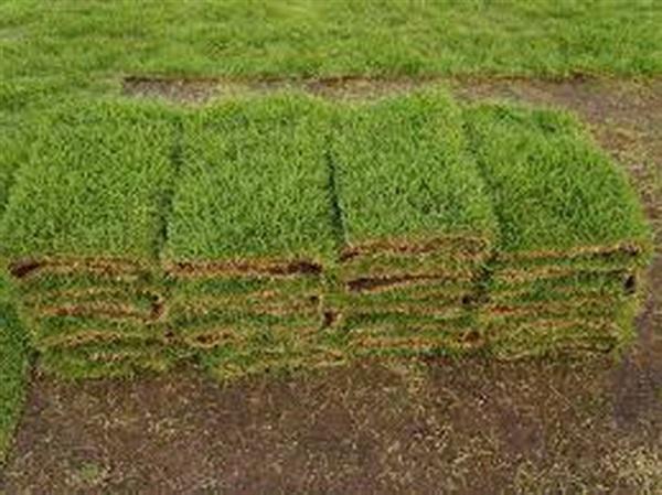 รับปูหญ้า ขายหญ้า