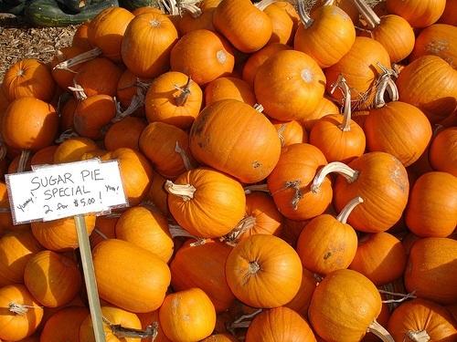 ฟักทองชูการ์พาย - Sugar Pie Pumpkin
