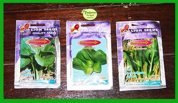 ผักกาดกวางตุ้ง 3 สามพันธุ์ กวางตุ้งดอก กวางตุ้งฮ่องเต้
