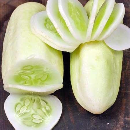 แตงกวาสีขาว  White Wonder Cucumber