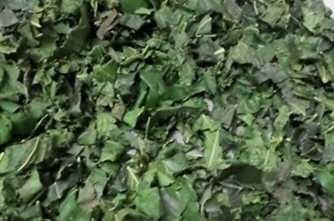 ชาใบหม่อน Mulberry Leaf Tea