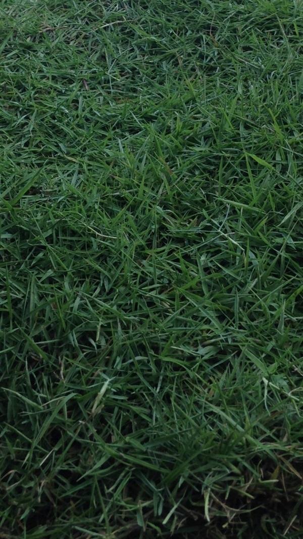 หญ้านวลน้อย บริการรับปูหญ้า