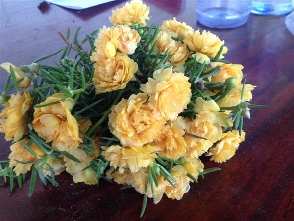 แพรเซียงไฮ้ดอกสีเหลือง