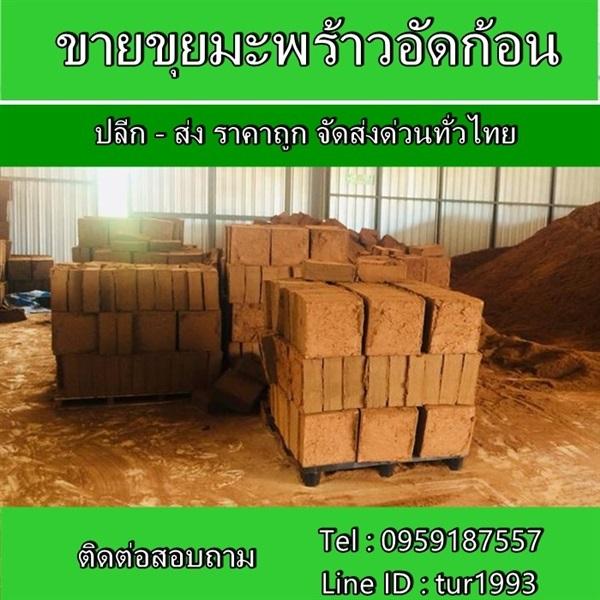 ขุยมะพร้าวอัดก้อน ปลีก-ส่ง ราคาถูก จัดส่งด่วนทั่วไทย