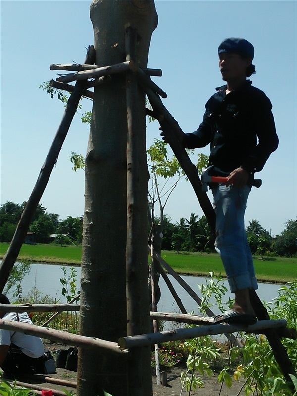 ให้บริการ เปลี่ยนไม้ค้ำยัน จากไม้ยูคาเป็นเหล็ก ย้ายบ้าน ,,บริการดูแลสวน