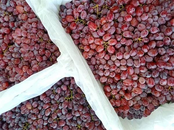 องุ่นไร้เมล็ด หวาน กรอบ อร่อย สดจากสวน กก ละ 130 บาท ขั้นต่ำ