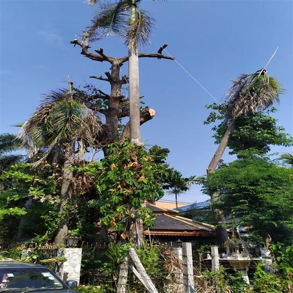 รับตัดไม้ใหญ่ ต้นไม้สูง ,,บริการดูแลสวน