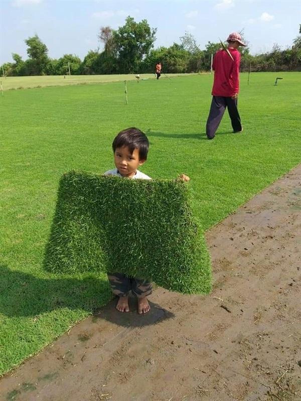 ขายหญ้านวลน้อย